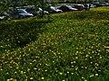 16.05.2012 - panoramio.jpg