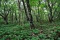 180727 Nasu Heisei-no-mori Forest Nasu Japan15.JPG