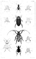 1847 BostonJournal NaturalHistory v5 illus1.png