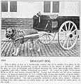 1875-esquimaux-dogs 11.jpg