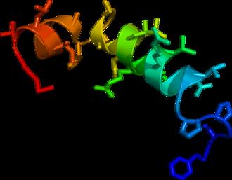 Orexin - Image: 1CQ0 crystallography