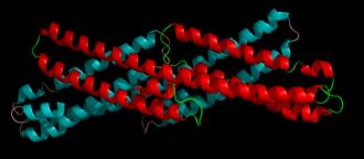 Amyloid precursor protein - Image: 1rw 6 e 2 app