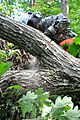1st Battalion chops down trees during AT 110915-A--657.jpg