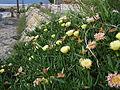 2004-05-22 Inujima,犬島 093.jpg