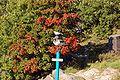 2009-09-19-helsinki-by-RalfR-045.jpg