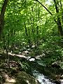 2013-05-12 15 09 25 View down the rocky stream along the MacEvoy Trail at around 480 feet in Ramapo Mountain State Forest.jpg