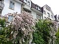 2014-05-12 Solothurn 05.jpg