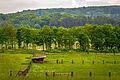 20150524 Wald und Wiese am NSG Bostalsee IMG 4692 by sebaso.jpg