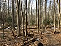 2016-02-08 11 53 37 View north along the Gerry Connolly Cross County Trail between Miller Heights Road and Vale Road in Oakton, Fairfax County, Virginia.jpg
