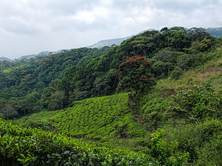 Sinharaja Forest Reserve protected area in Sri Lanka