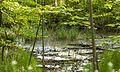 2017-05-16 Naturdenkmal Weiher 2.jpg