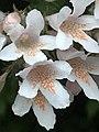 2020-05-18 SP, Unidentified plants, 03.jpg