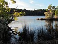 42 Bennetts Point RD Green Pond SC 6870 (12397935923).jpg