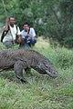 48 Komodo Komodo Island Indonesia.jpg