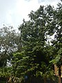 71Mehan Garden Ermita Manila Universidad de Manila 33.jpg
