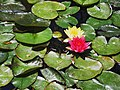 A@a lilies from and. collection - panoramio.jpg