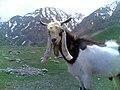 AZNA - Kamandan Village ازنا - کمندان.jpg