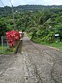A road in Trinité (Martinique).jpg