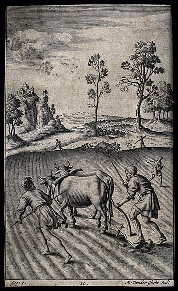 File:A team of oxen being made to pull a plough. Engraving by M. Wellcome V0025739.jpg