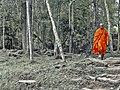 A walk in the woods (24499528139).jpg