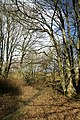 A woodland path by Whitmuirhill Loch - geograph.org.uk - 1174557.jpg