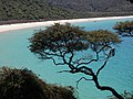 Abel Tasman Park - Tree over beach.jpg