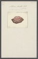 Actinia fiscella - - Print - Iconographia Zoologica - Special Collections University of Amsterdam - UBAINV0274 109 05 0013.tif