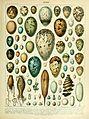 Adolphe Millot oeufs.jpg