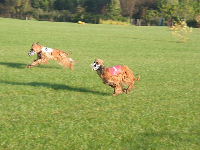 deportes caninos que tú y tu perro tenéis que probar este verano
