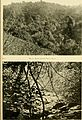 African invertebrates - a journal of biodiversity research (1909-1916) (17944688795).jpg