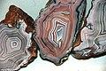 Agate (Wave Hill, Australia) 2 (31912719864).jpg