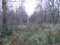 Alder Coppice Path - geograph.org.uk - 1082719.jpg