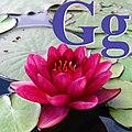 Alfabet roślin - literka G.jpg