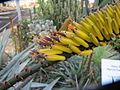 Aloe flowers (7006854211).jpg
