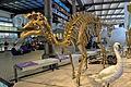 AmurosaurusBrussels.jpg