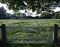 An Ivy Lane Meadow - geograph.org.uk - 453412.jpg