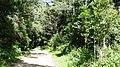 Anamudi Shola National Park - panoramio (7).jpg