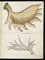 Animal drawings collected by Felix Platter, p2 - (134).jpg