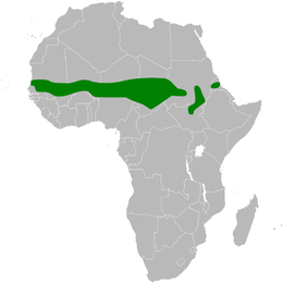 Anthoscopus punctifrons distribution map.png