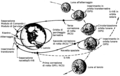 Apollo-8-mission-profile-it.png