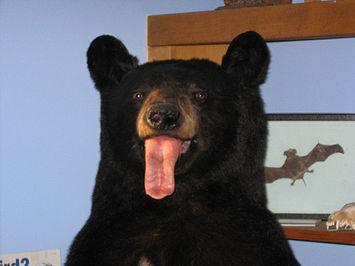 April Fool's Bear.jpg