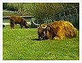 April Parc Natural Mundenhof Freiburg expropiated Baron Manors - Master Wildlife ^ Zoo Photography 2013 - panoramio (13).jpg