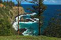 Araucaria heterophylla Norfolk Island 2.jpg