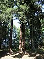 Arboretum Bukovina 465.jpg
