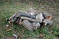 Arboretum logs woodpile at Goodnestone Park Kent England 1.jpg