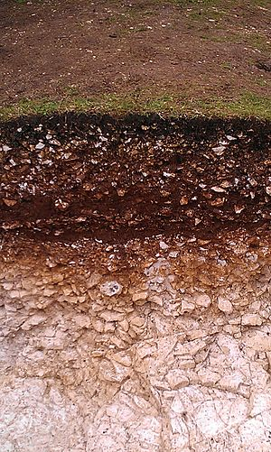 Stratigraphy (archaeology) - Archaeological stratigraphy at the Iron Age site of Goosehill Camp on Bow Hill, West Sussex in Southern England.