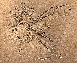 Archaeopteryx Nummer 11