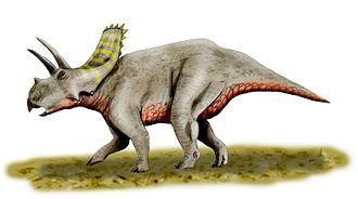 1925 in paleontology - Arrhinoceratops brachyops