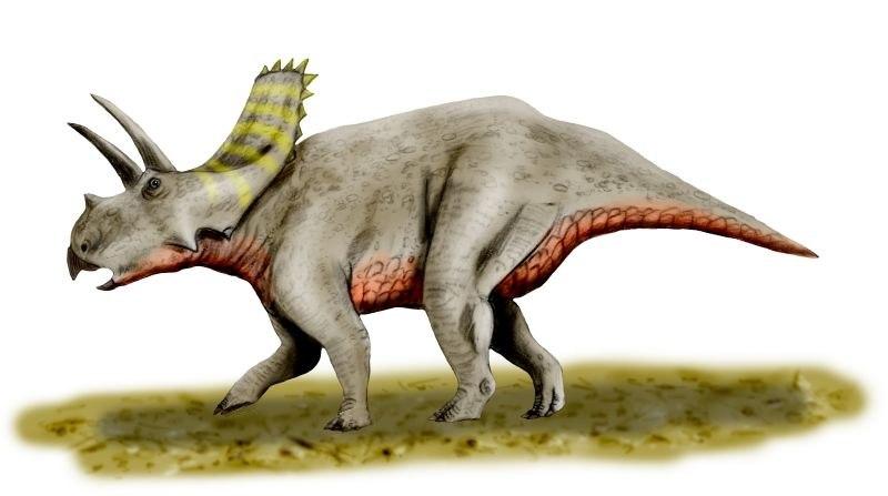 Arrhinoceratops BW