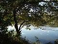 Arvore e rio - panoramio.jpg